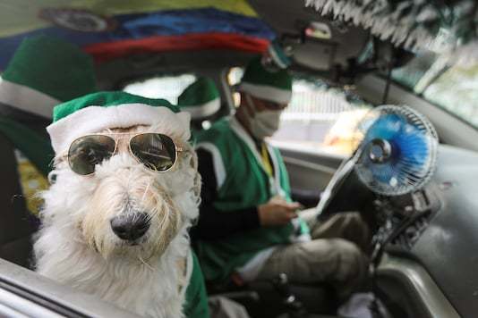 Nicolas Walteros, 52, sits inside a taxi with his dog Colonel using Santa's hats, amid the spread of the coronavirus disease (COVID-19) pandemic, in Bogota, Colombia.   REUTERS/Luisa Gonzalez