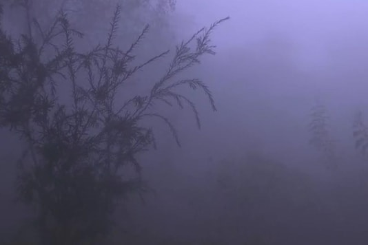 Rajghat blanketed in fog. (Image credits: ANI)
