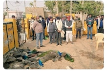 Bird Flu Scare in Rajasthan & MP as Virus Detected in Dead Crows, Patients to be Scanned