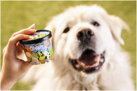 Dog treats by Ben and Jerry's   Image credit: AP