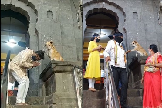 Video grab of dog blessing devotees in Maharashtra temple.  (Credit: Facebook/ Arun Limadia)