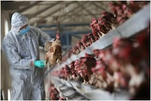 GPS, Satellite Tracking and 'Bird Ringing': What India Can Learn from Previous Bird Flu Outbreaks