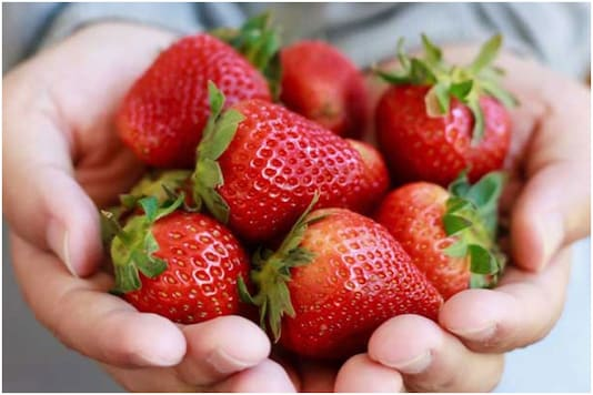 Strawberry cultivation set to get a push in UP | Image credit: Twitter