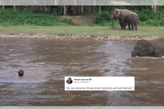 Screenshot from 2016 video uploaded by  elephantnews / YouTube.