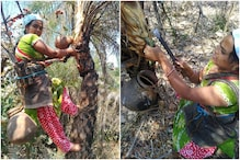 Telangana Woman Climbs 30 ft Tall Palm Trees to Tap Toddy Every Day to Raise Her Daughter
