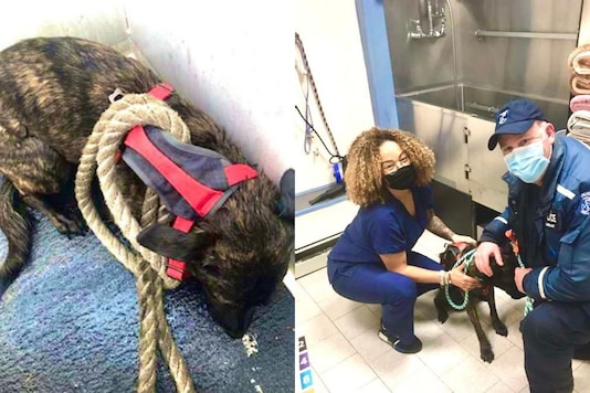 The rescued dog with NYPD force.