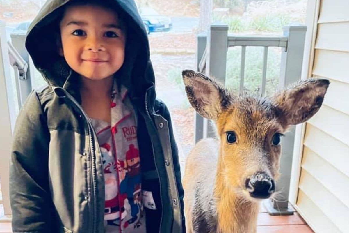 Little Boy Brings Home a 'Deer Friend' from the Woods where He Went to Play in Virgina