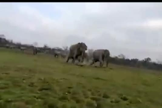 Screen grab from the video shows the elephants charging at the safari jeeps.