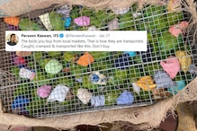 Huddled in Cages, Heads Covered with Cloth, This Tweet Shows the Inhuman World of Bird Smuggling
