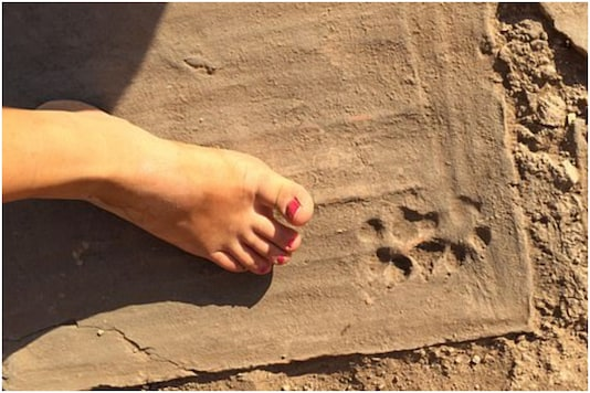 1500-year-old paw prints of puppies were found engraved on terracotta tiles in a house in Turkey   Image credit: President and Fellows of Harvard College