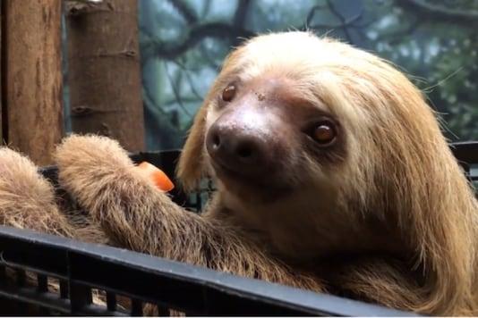 Photo: Philadelphia Zoo/Instagram