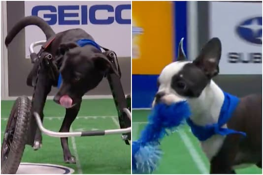 Puppy Bowl 2021   Image credit: Twitter