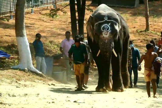 Rejuvenation camp for elephants in Coimbatore.  (Credit: Twitter/ ANI)