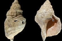 This Ancient Conch Shell Can Still Play a Deep, Plaintive Tune After 18,000 Years