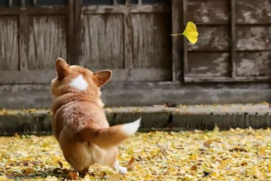 Corgi's picture shared on Instagram.