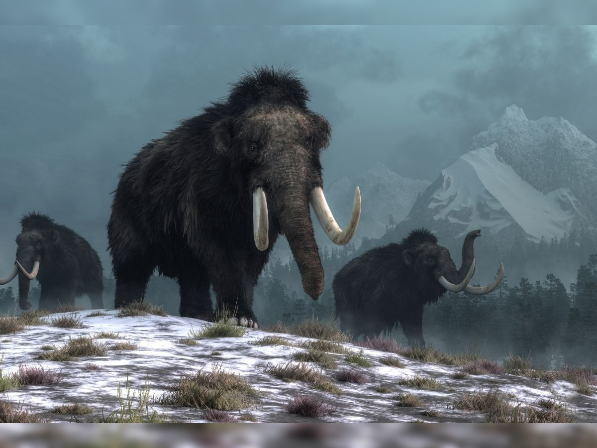 Alive found woolly mammoth 28,000