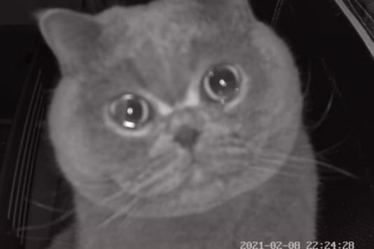 The sad cat seen in front of the security camera.