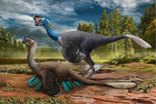 Illustration by Zhao Chuang where an oviraptorid theropod dinosaur broods its nest of eggs. (Credit:Carnegie Museum of Natural History/ Twitter)