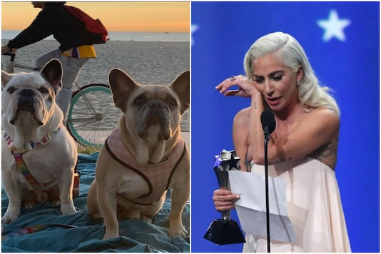 Lady Gaga's dogs were kidnapped recently | Image credit: Instagram/Reuters