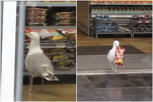 Thieving seagull in Aberdeen   Image credit: Facebook