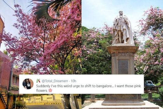 Bengaluru residents shared photos of pink flowers blooming all over the city on social media. (Credit: twitter)