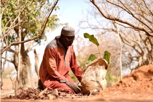 Yacouba Sawadogo, a farmer, who is known as the 'man who stopped the desert' for bringing life back to the arid lands. (Credit:Reuters)