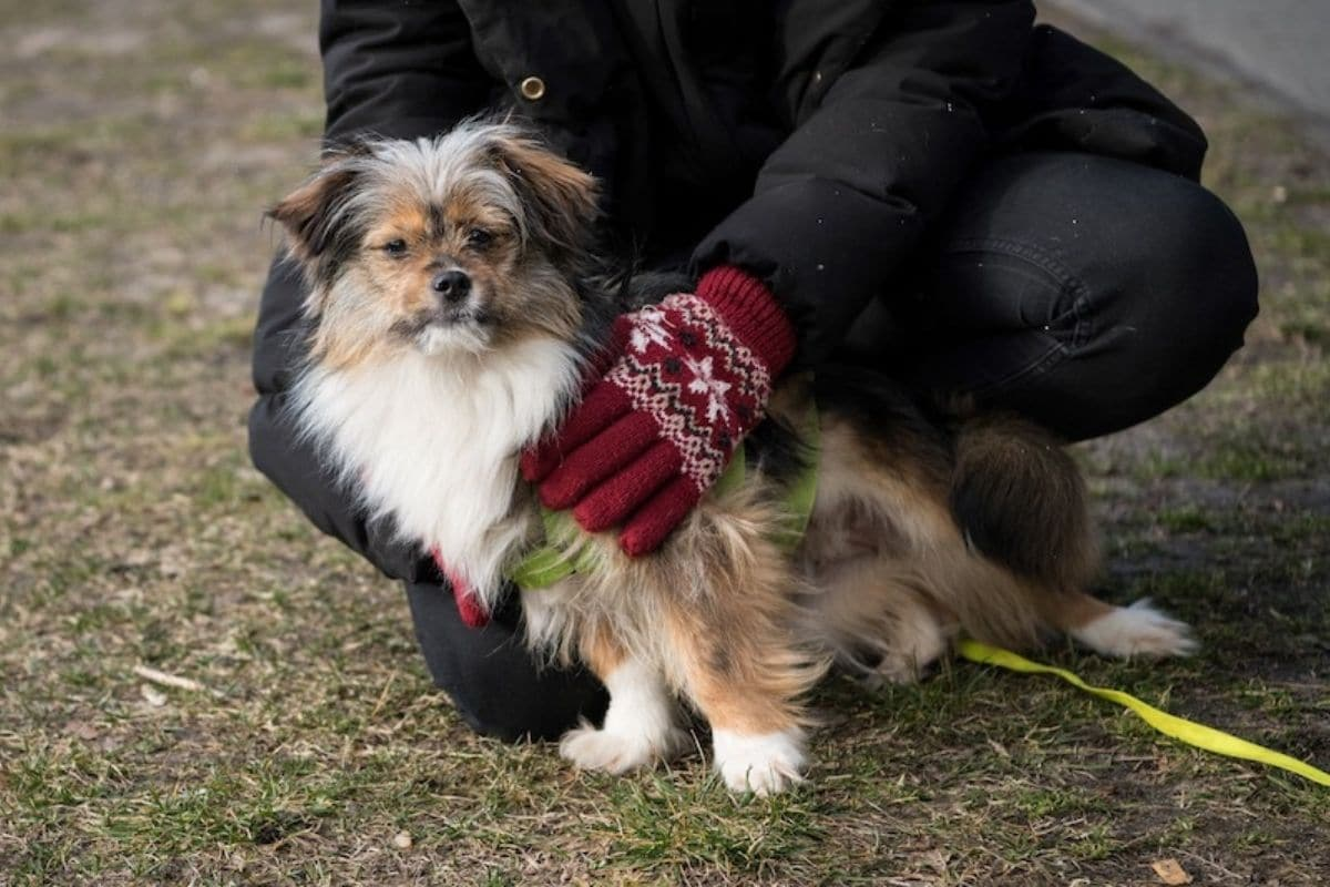 The number of dogs sold in the country increased by a