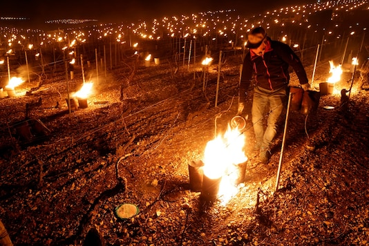 A wine grower lights heaters early in the morning, to protect vineyards from frost damage outside Chablis, France.  REUTERS/Pascal Rossignol