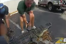 WATCH: Enormous 10-foot-long Alligator Rescued from under a Parked Car in Florida
