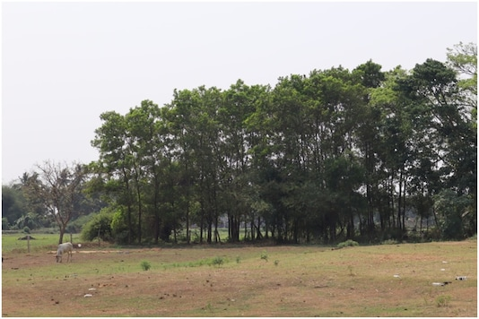 A mini forest lying close to the Paradip industries, as shown in the background. (Pic credit: 101Reporters)