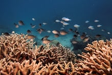 NASA Joins Hands With Ocean Research Body to Map and Protect World's Coral Reefs