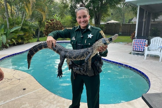 Deputy Heather Harris brought out the alligator from the swimming pool. (Credit: Pinellas County Sheriff's Office)