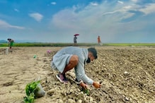 'Back To The Roots': Amarjit Singh Uses The Off-season to Learn New Things on Family's Paddy Farm