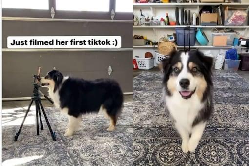 Video grab of dog's viral TikTok video.  (Credit: IG)