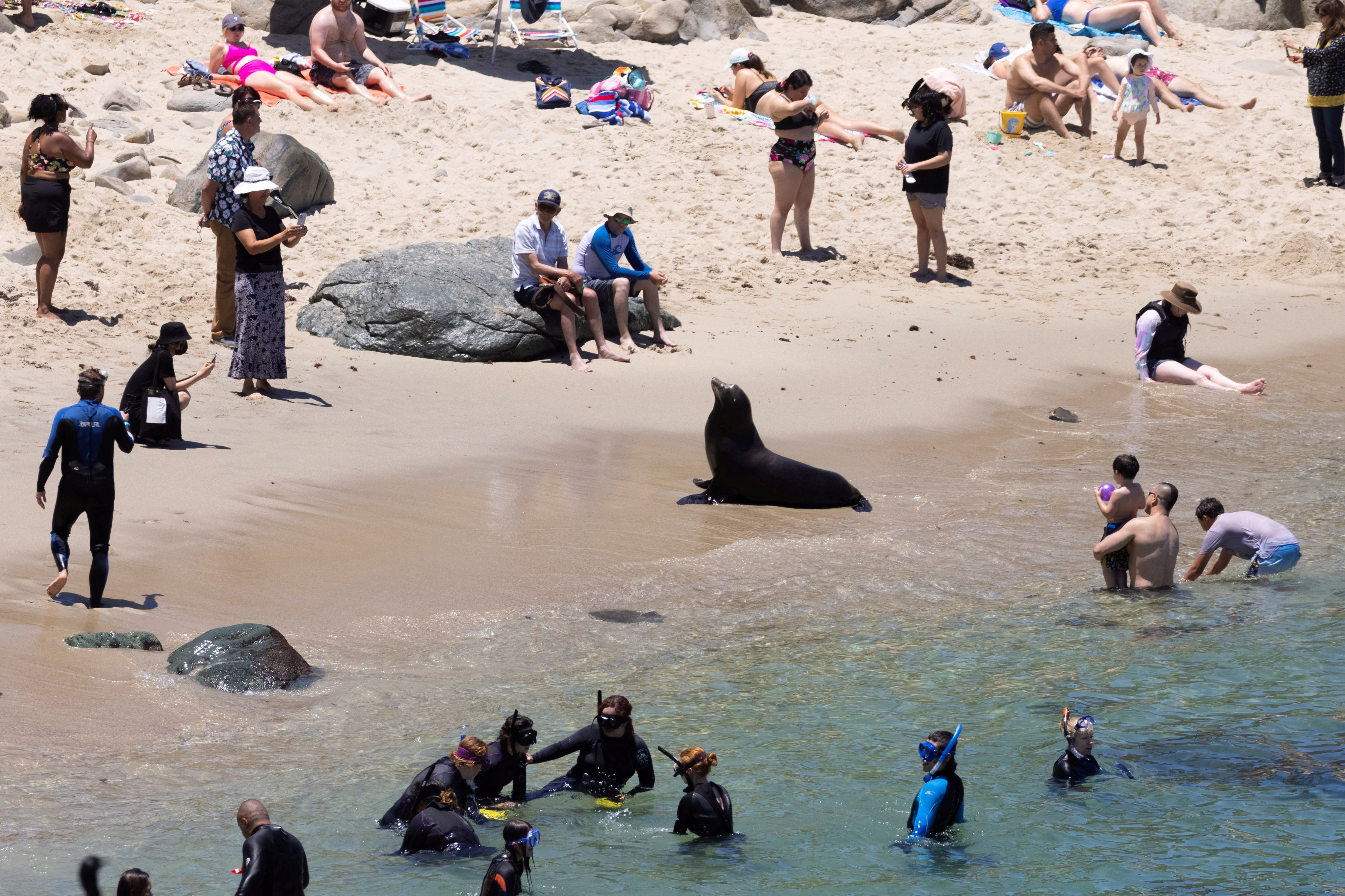 People visiting the beach look at a sea lion as tourism makes a comeback during the outbreak of the  disease in La Jolla, California. REUTERS/Mike Blake