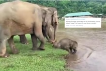 WATCH: This Baby Elephant Taking a Dip in River Leaves Netizens in Awe