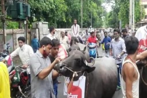 Pappu Yadav's JAP Takes Out Buffalo March in Patna to Protest Against Fuel Price Hike