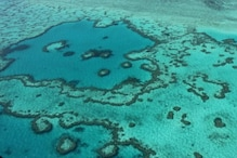 Great Barrier Reef Now on UNESCO's Endangered Heritage List: Damage, Cost and All FAQ Answered