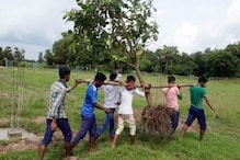 Men Carrying Uprooted Tree for Manual Transplantation in Jharkhand Wins Praises Online