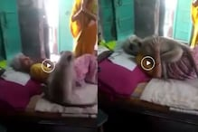 WATCH: Monkey Hugs Old Woman Who Fed Him before Leaving, Video Goes Viral