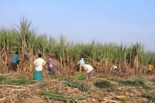 Sugarcane Farmers to Stage Protest in UP Capital on July 15