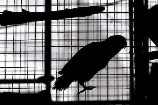 The court directed the lawyer appearing for the police to get instructions and report whether the petitioner was violating any provision of law by keeping birds as pets.
