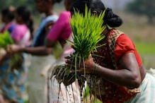 Liberalization Neglected Rural Growth for 30 Years. India Can No Longer Afford to Do That