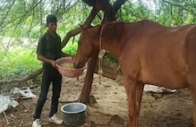 Schools Teacher Asks For Six-Month's Pending Salary, Gets a Horse