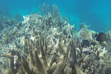Coral Reef Size of a Double-Decker Bus Found Near Australia