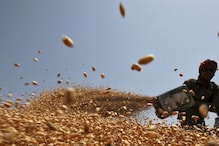 Govt Hikes Wheat MSP by Rs 40 to Rs 2,015 Per Quintal for 2021-22 Crop Year