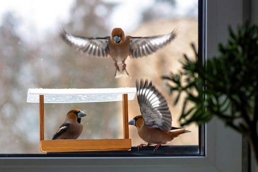 You can hang the bird feeder on your balcony or on a tree in your garden. (Representational Image: Shutterstock)