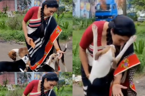 A video of Rupali Ganguly playing with street dogs has been winning the hearts on the internet.