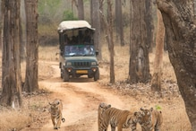 International Tiger Day 2021: Here's What You Can do to Save the Tiger