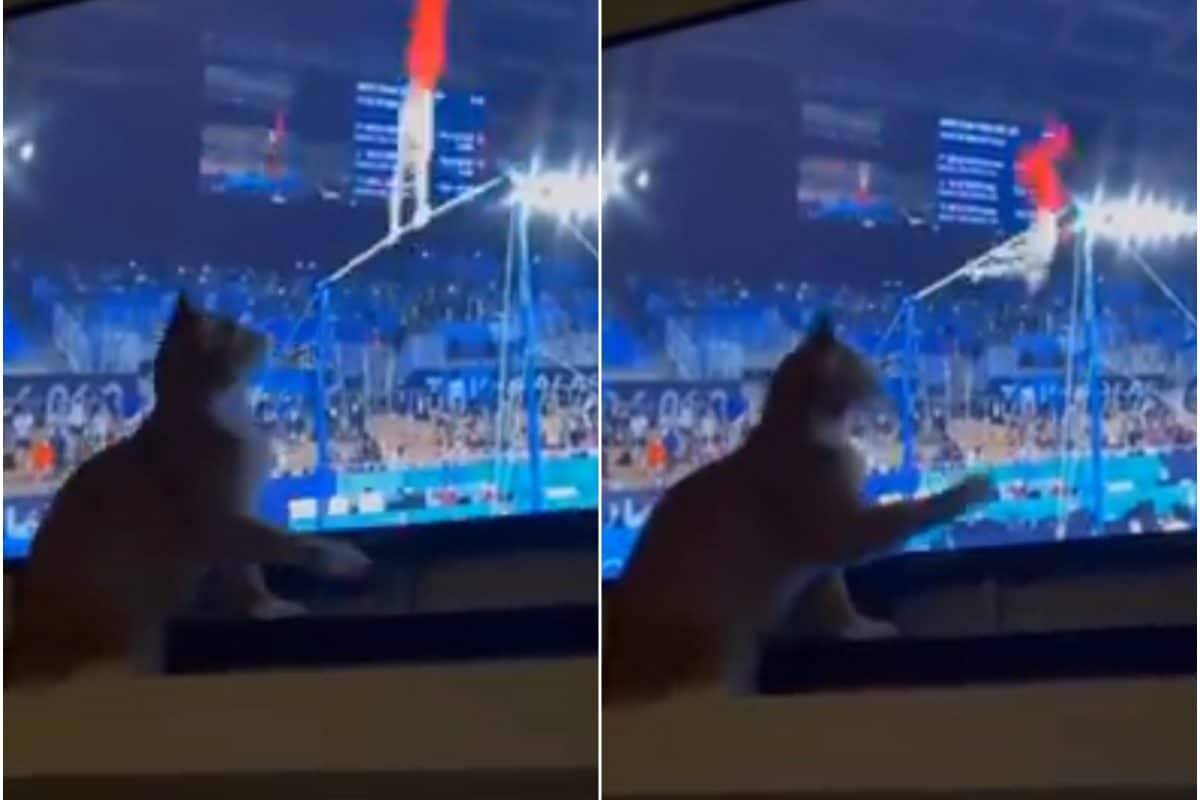 Cat Curiously Watches Tokyo Olympics Gymnastics on TV, Video Goes Viral